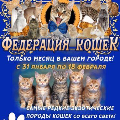 Выставка кошек в Гатчине